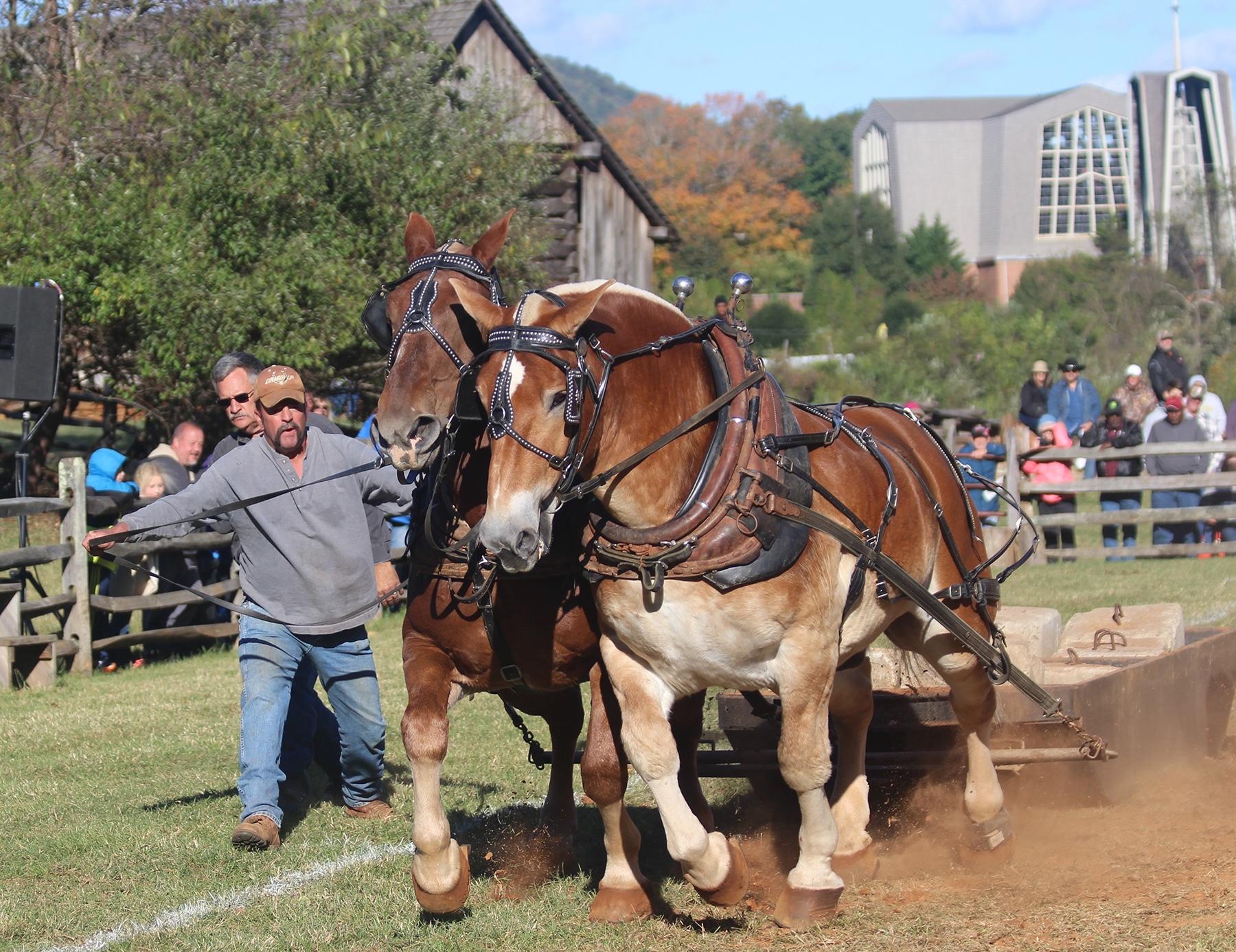 Horse pull at the Blue Ridge Folklife Festival