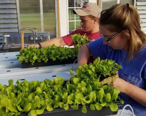 Ferrum Ag students Sean Trollinger and Jody Jefferies work in new hydroponic greenhouse facility. Dr. Bob Pohlad photograph.